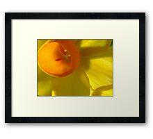 Let The Sunshine In Framed Print
