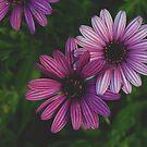 purple floral by lisjen