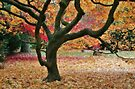 Autumn Acer by Astrid Ewing Photography