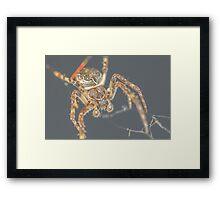 Furry Spider Framed Print