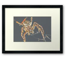 Furry Spider Framed Print
