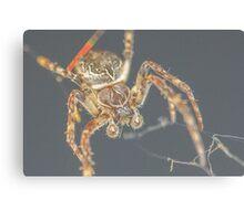 Furry Spider Canvas Print