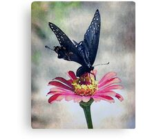 One of Nature's Finest Moments Canvas Print