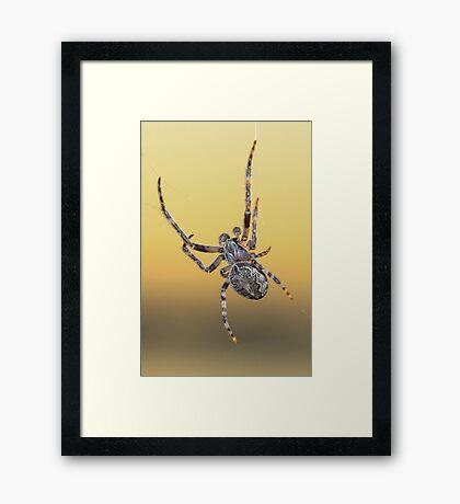 Fury Spider 2 Framed Print