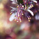 floralised by lisjen