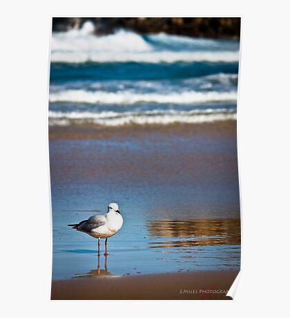 Lone Gull Poster
