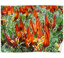 Fiery Nature Poster