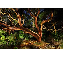 Red Gums Lightpainted Photographic Print