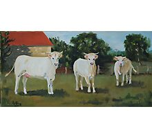 Les Vaches Photographic Print