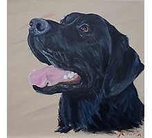Black labrador Photographic Print
