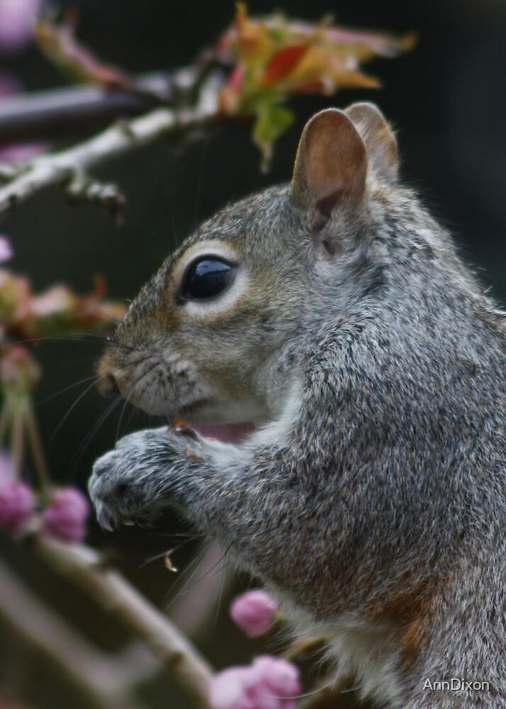 Grey Squirrel Profile by AnnDixon