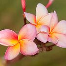 Tropicana - Far North Queensland by Jenny Dean