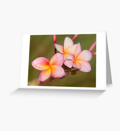 Tropicana - frangapani flower Greeting Card