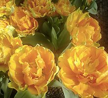 Yellow and Orange Tulip 3 by waxyfrog