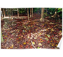 Red Crabs Migration In Rain Forest Poster