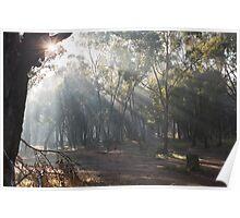 Foggy Forrest Poster