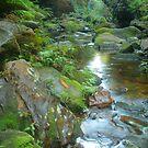 Canyon stream by Michael Matthews