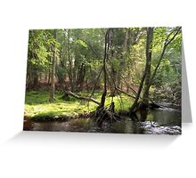Naturescape 51 Greeting Card