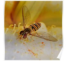 Hoverfly Close up Poster