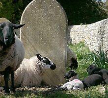 Faithful Flock by Photogothica