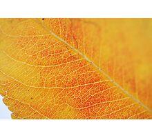 Yellow vein Photographic Print