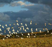 Birdlife Aplenty by wilderness