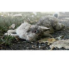 Roadkill Rabbit Photographic Print