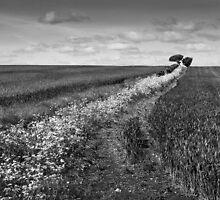 Flower Trail by Geoff Carpenter