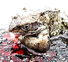 Roadkill Frog by Photogothica