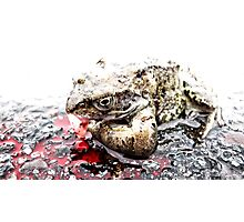 Roadkill Frog Photographic Print
