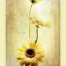 Summer Daisies by Aj Finan