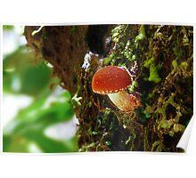 Fungi Season 1116 - Red Button Poster