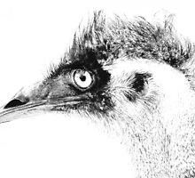 Emu ~2 by Carla Jensen