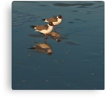 GULLS AND REFLECTION Canvas Print
