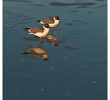GULLS AND REFLECTION Photographic Print