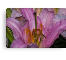 Sunny Bonaire Oriental Lily Canvas Print