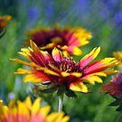 Arizona Suns in the Garden by William Martin