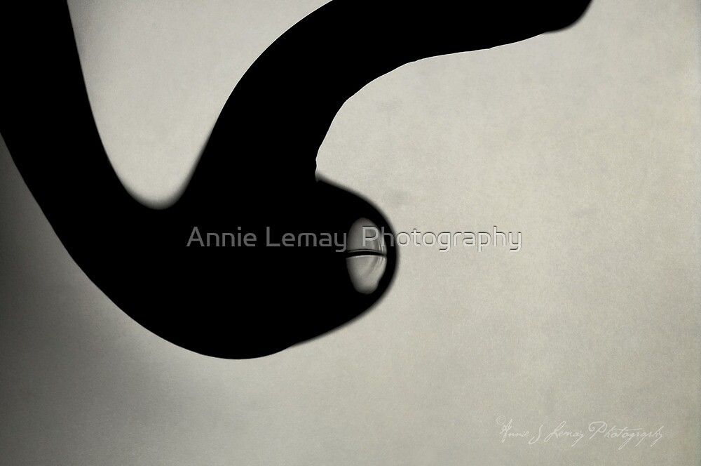 La Drop by Annie Lemay  Photography