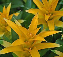 Bursting Bloom by Susan Lotter