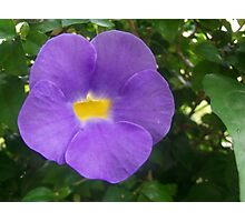 Simple Purple Flower Photographic Print