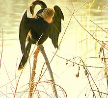 Anhinga on Stilts by mhm710