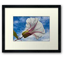 Morning Glory ~ Lyme Regis Framed Print