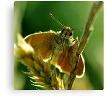 Small Skipper Canvas Print