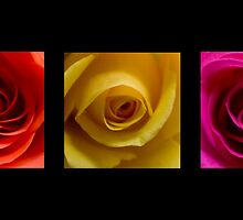Triptych Orange Yellow & Pink Roses by printsbypixie