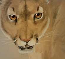 Cougar by cdgarciamejia