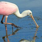 Pretty pink ! by jozi1