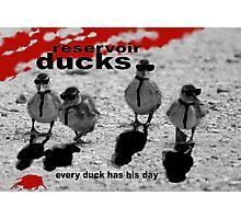 Reservoir Ducks Photographic Print