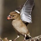 Speedy Chaffinch by Robert Wright