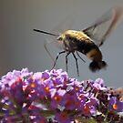 Flutterfly by katpartridge
