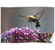 Flutterfly Poster